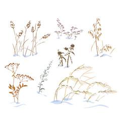 wild herbs and cereals under snow vector image
