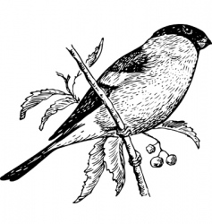 bird pyrrhula vector image vector image