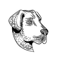 Anatolian shepherd dog etching black and white vector
