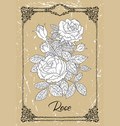 Drawing rose vector
