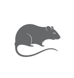 gray rat vector image