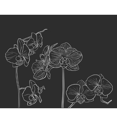 Hand drawn orchid on black vector