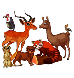 isolated picture many animals vector image