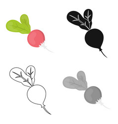 Radish icon cartoon singe vegetables icon from vector