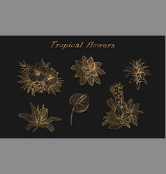 tropical flowers in a set isolated vector image