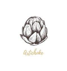 artichoke sketch hand drawing vector image