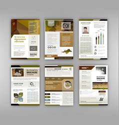 brochure template with infographics element vector image