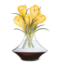 Crocuses blooming in vase vector