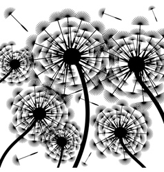 Dandelion silhouette-background vector image