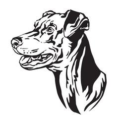 decorative portrait of dog german pinscher vector image