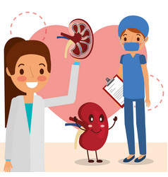 female doctor and surgeon kidney cartoon vector image
