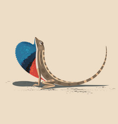 Lizard agama sitana vector