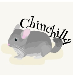 Pets Gray chinchilla domestic animals vector image