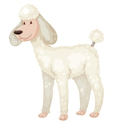 Poodle dog with white fur vector image