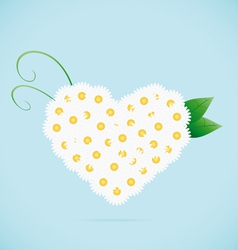 Chamomile heart vector image vector image