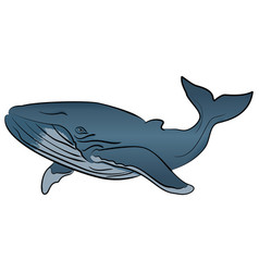 blue whale isolated on white background vector image