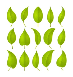 green leaves set vector image
