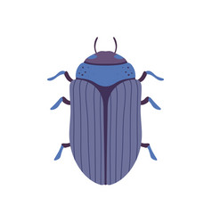 Scarab beetle insect bug top view vector