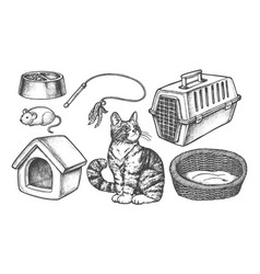 set isolated sketch cat items vector image
