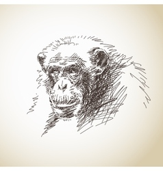 Sketch of chimpanzee head vector