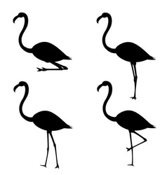 Set of silhouettes of flamingo in different poses vector