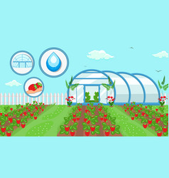 Berry cultivation farming technology vector