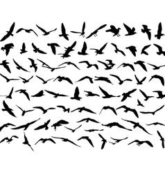 Bird seakull vector