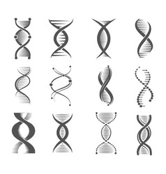 dna spiral icons helix human technology research vector image