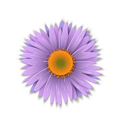 paper art aster vector image