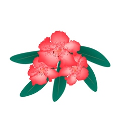 Red Rhododendron with Green Leaves vector image
