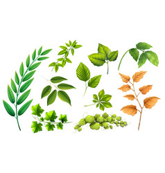set of different leaf vector image