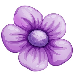 A violet flower vector image vector image
