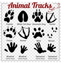 Animals tracks - set vector