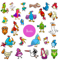 Cartoon birds animal characters big collection vector