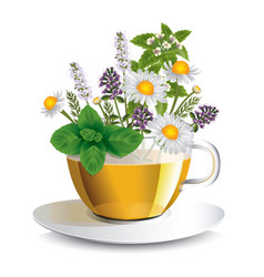 Herbal tea in a transparent cup vector
