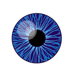 iris eye vector image