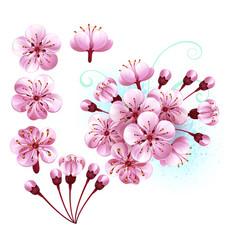 set sakura flowers vector image