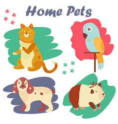 bright images of domestic animals cat parrot dog vector image