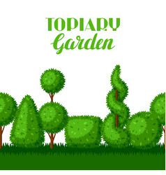 boxwood topiary garden plants seamless border vector image