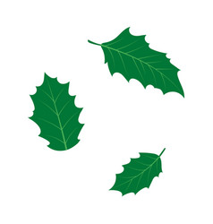 Flat cartoon holly tree leaves set vector