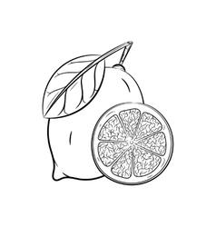 Hand drawn Lemon sketches vector image