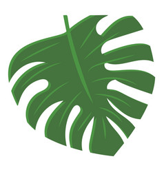 monstera leaf icon cartoon style vector image