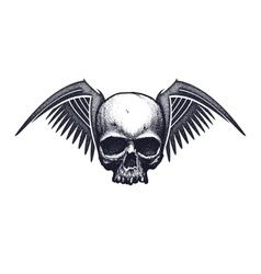 Black and white human skull vector image