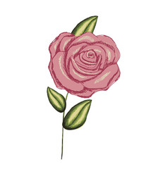 colorful realistic flowered rose with leaves and vector image vector image