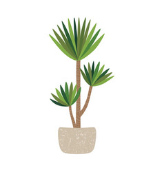 yucca plant in pot home tree vector image