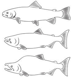 red fish vector image vector image