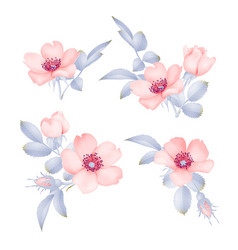dog-rose blooms wild rose set vector image