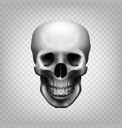skull transparent background vector image