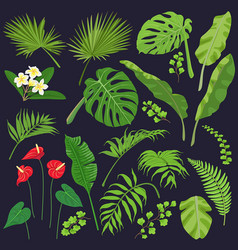 tropic leaves and flowers set vector image
