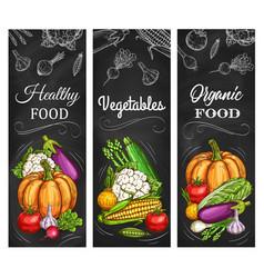 vegetables farm harvest organic food banners vector image